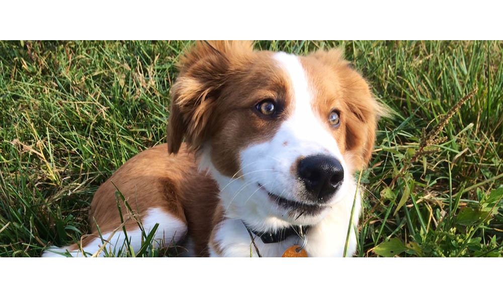 Large happy healthy puppy