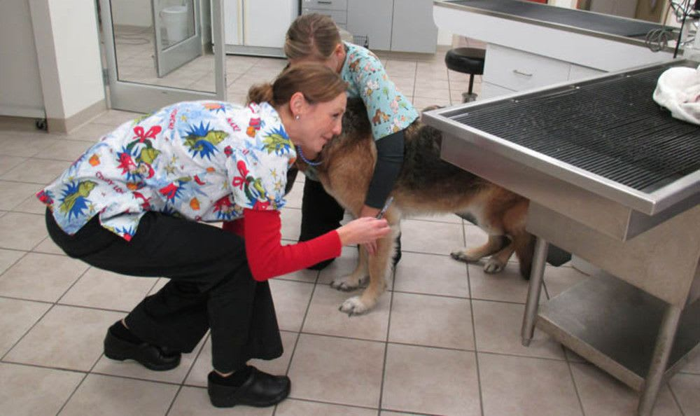 Treatment at Augusta Valley Animal Hospital