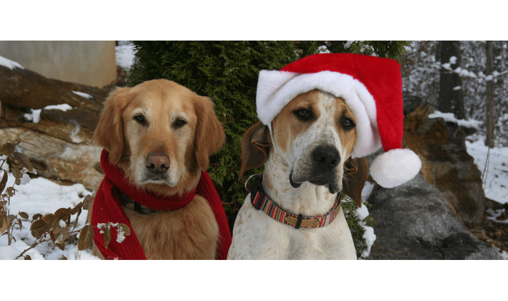 Two large dogs enjoying winter at Augusta Valley Animal Hospital