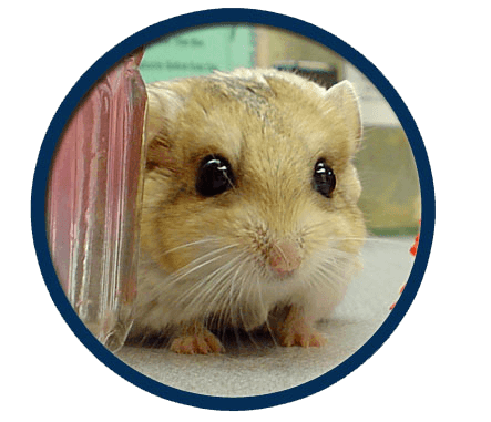 Small mammals treated at Midwest Bird & Exotic Animal Hospital