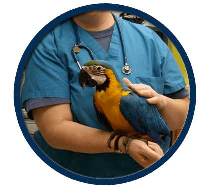 Parrots treated in Elmwood Park