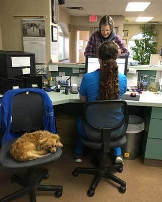 Team member at Lee's Summit Animal Hospital