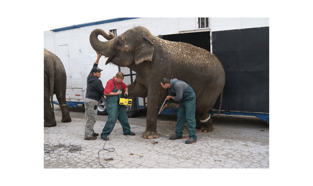 Elephants aren't strange to us! We take care of exotic animals at Lee's Summit Animal Hospital.