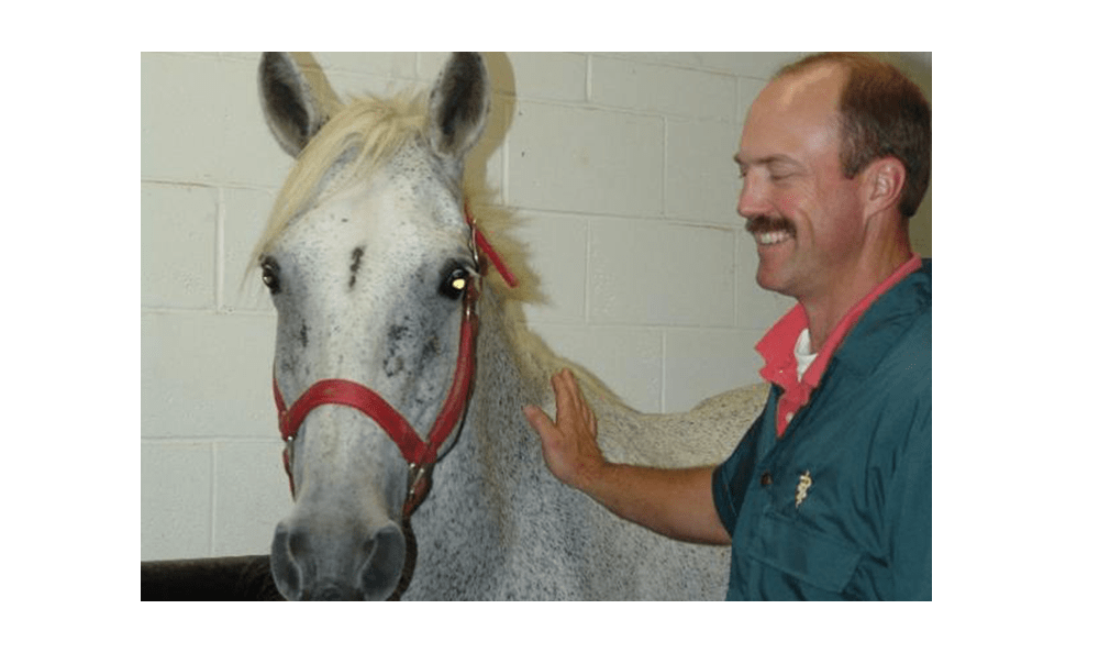 Hay is for horses! The doctors at Lee's Summit Animal Hospital definitely know that!