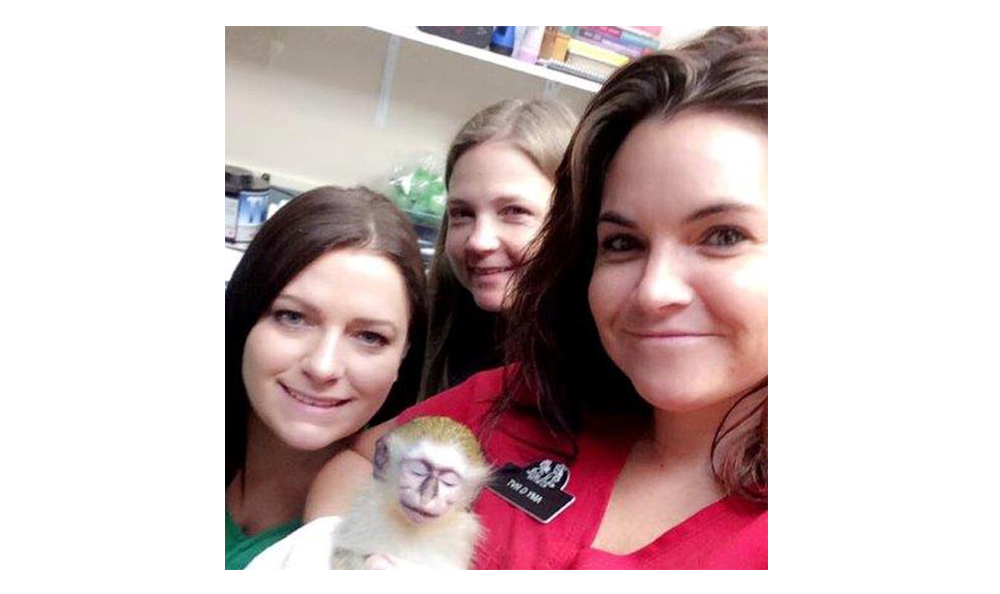 A little monkey gets some care and attention from Lee's Summit Animal Hospital staff.