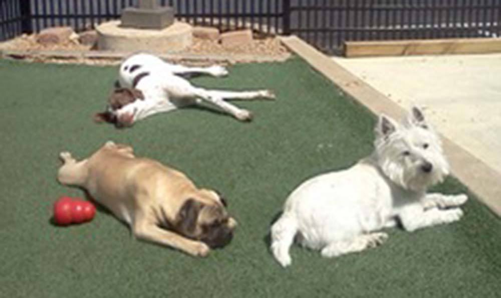 Lazy dogs at Veterinary Group of Chesterfield.