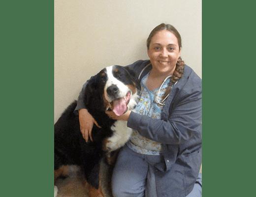 Dr. Bayer, DVM at Chesterfield Animal Hospital