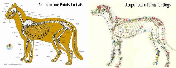 Acupuncture visual-reference for cats and dogs