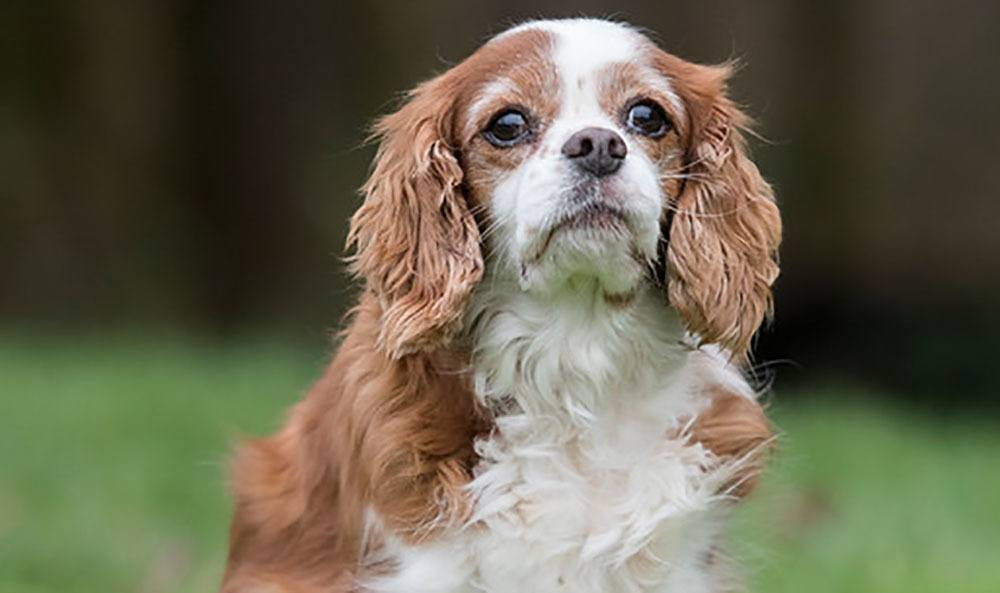 Sam's dog at Newcastle animal hospital