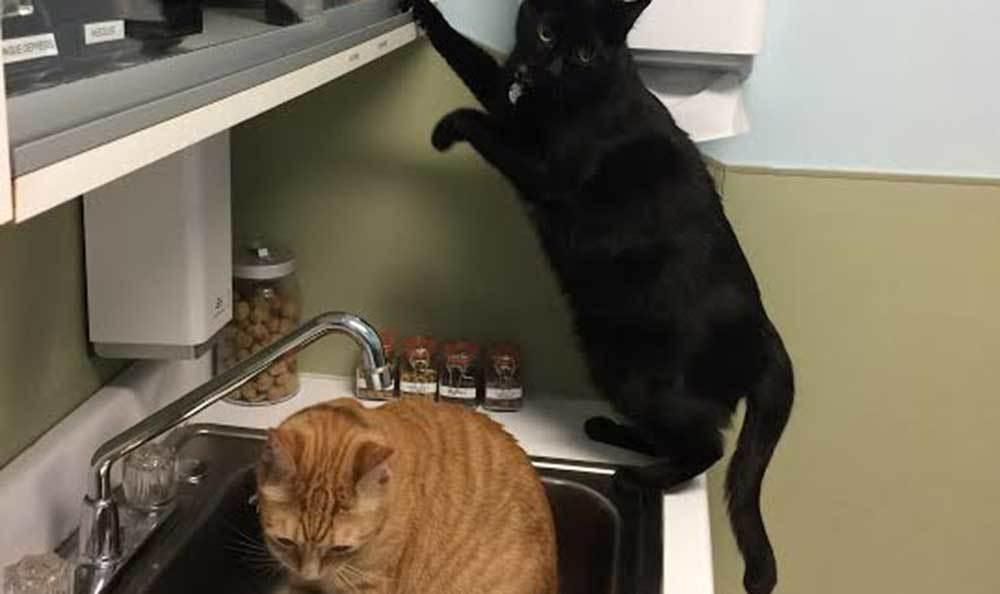 Cats playing at Riverside Animal Hospital North.