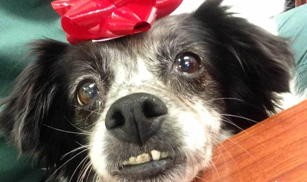 A pretty grin from a friend of Riverside Animal Hospital North