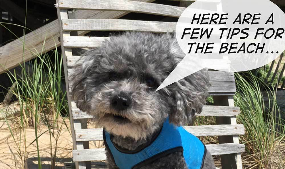 A poodle gives Riverside Animal Hospital North patients advice.