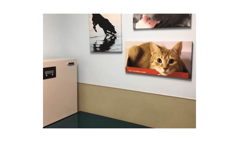 Photos of other animals ease your pet in the exam room at Riverside Animal Hospital North.