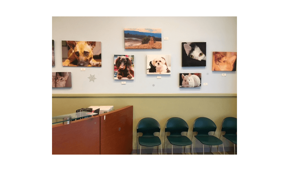 Welcome to Riverside Animal Hospital North