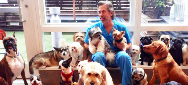 About our New York Animal Hospital