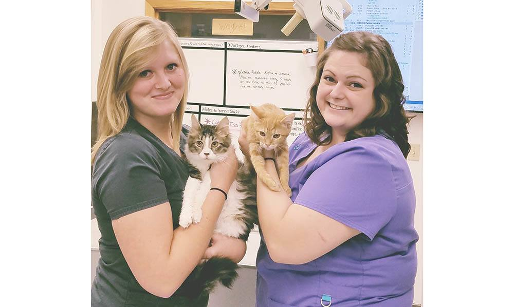 About our Des Moines Animal Hospital