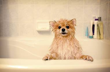 Animal Hospital bathing services in Olathe
