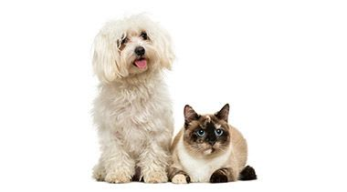 Animal hospital in Sioux Falls are here to make your pets happy and healthy