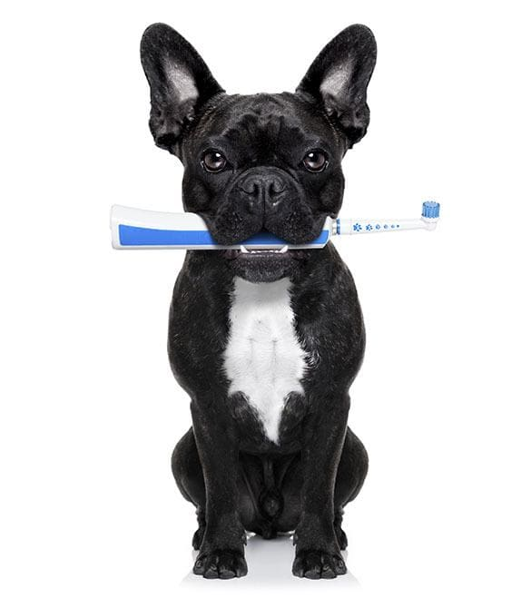 Pet dental care is important at Lake Havasu City Animal Hospital