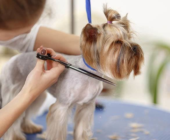 Grooming services for your pet at St. Simons Island Animal Hospital