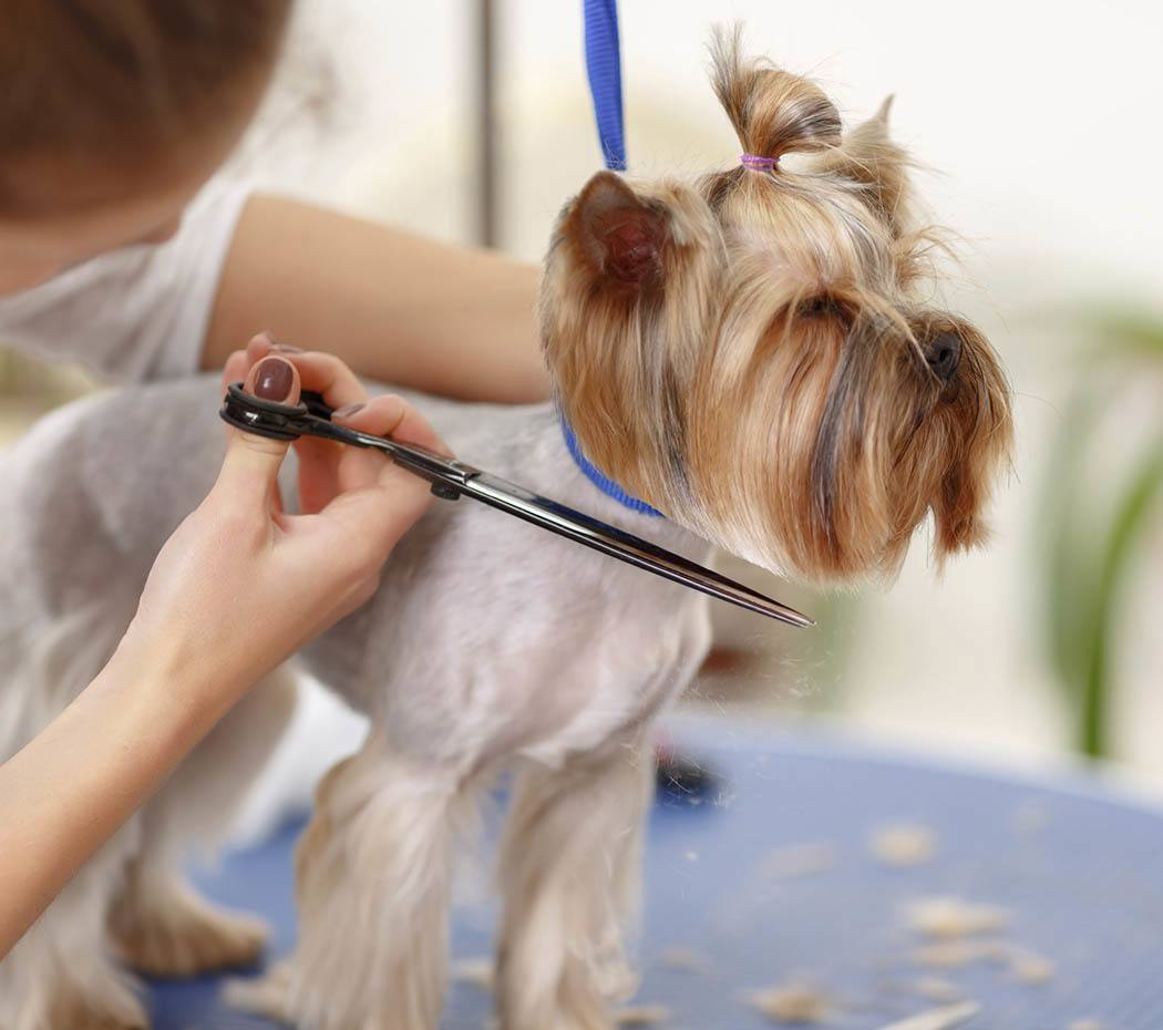 Grooming services for your pet at Chesterfield Animal Hospital