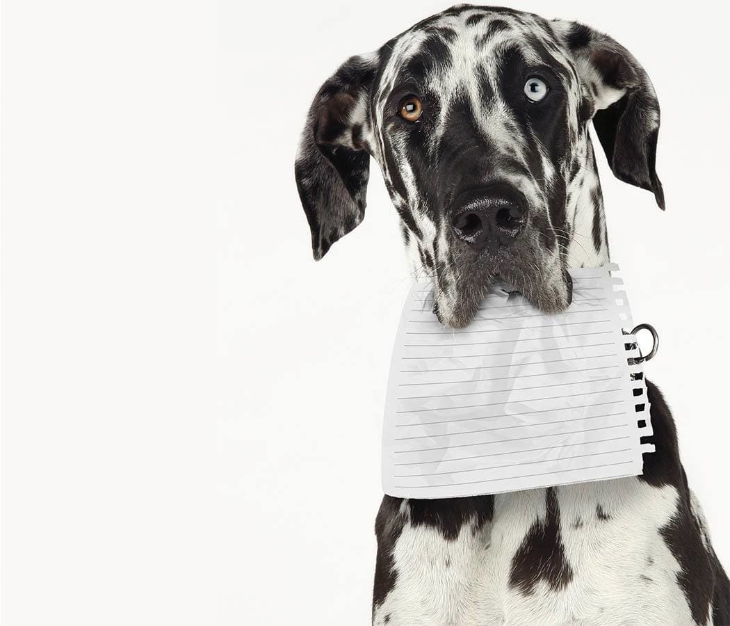 A doggie with a document at Black Forest Veterinary Clinic in Colorado Springs, Colorado