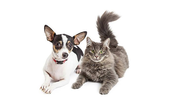 Animal Hospital in Lewisburg are here to make your pets happy and healthy