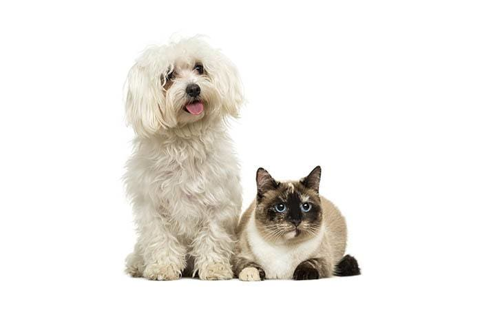 Pets posing at North Paw Animal Hospital in Durham, North Carolina