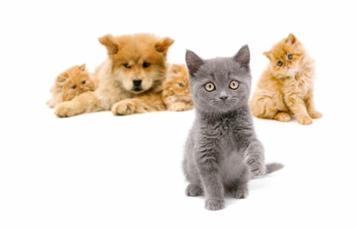 Animal Hospital in Chesterfield are here to make your pets happy and healthy