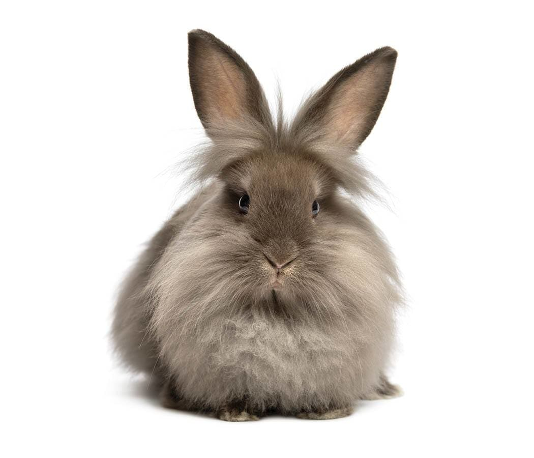 Fluffy Bunny on services page of North Creek Pet Hospital