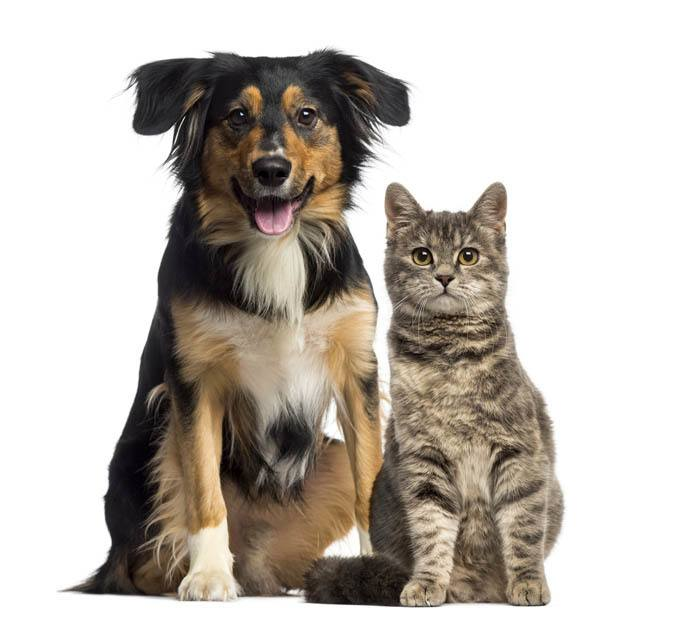 Information on spaying at Chicopee Animal Hospital