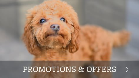 Promotions and offers for our animal hospital in Boise