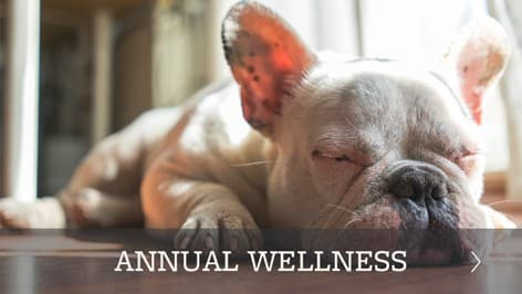Animal Hospital wellness plans offered in Chester