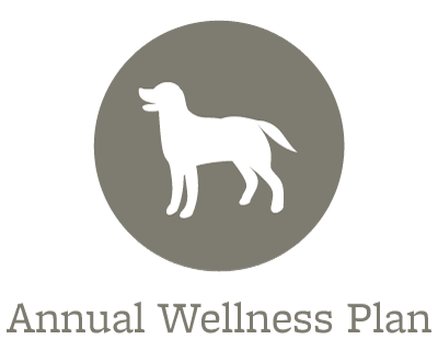 Animal Hospital wellness plans offered in Dover