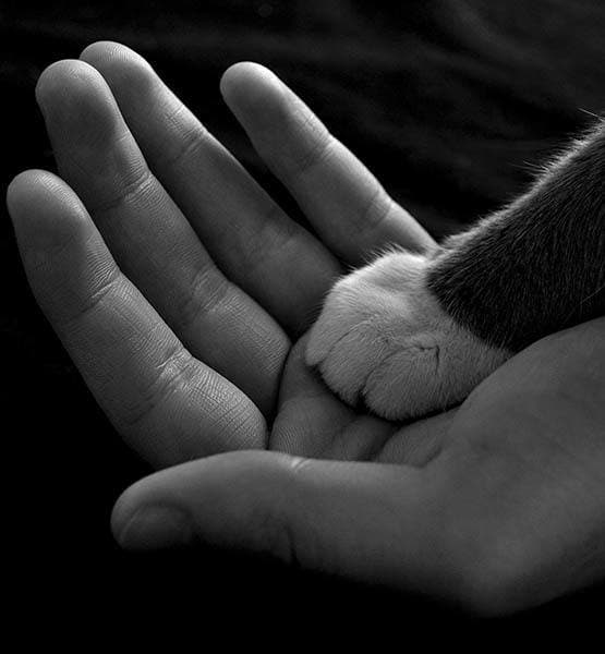 Cat paw in human hand at Civic Feline Clinic in Walnut Creek, CA