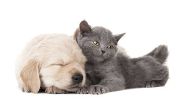 Animal hospital in Kettering are here to make your pets happy and healthy