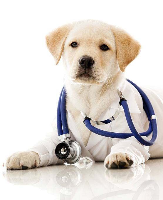 Procedures in Arlington Animal Hospital