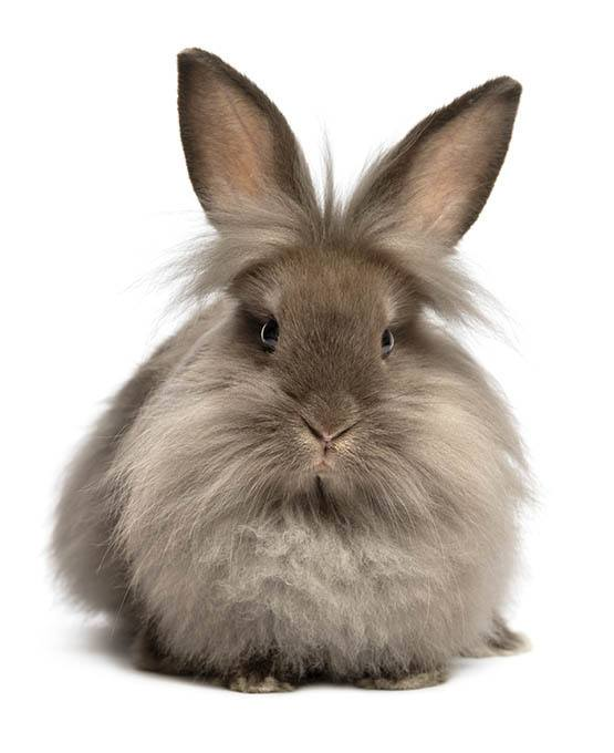 Rabbit and exotic pet care at East Ventura Animal Hospital