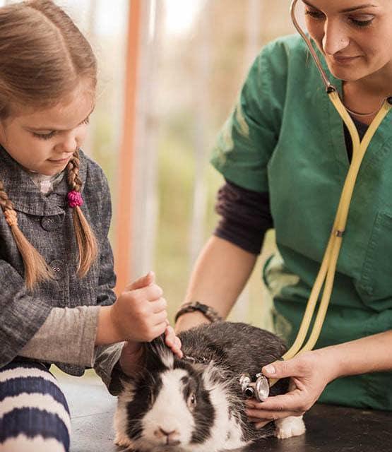 Managing your pet's health at Panama City Beach Animal Hospital