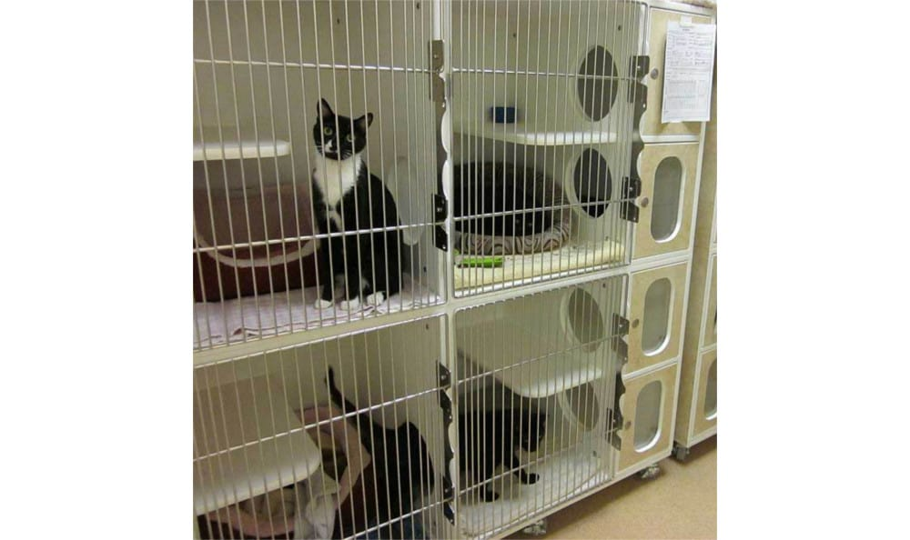Cat Condos at Novak Animal Care Center
