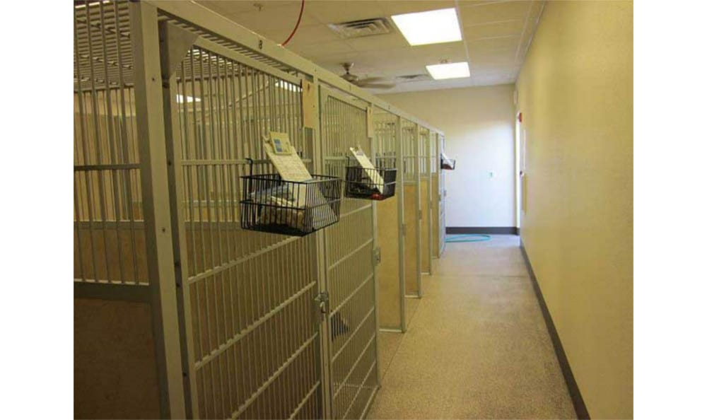 A view of the kennels at Lake Havasu City Animal Hospital