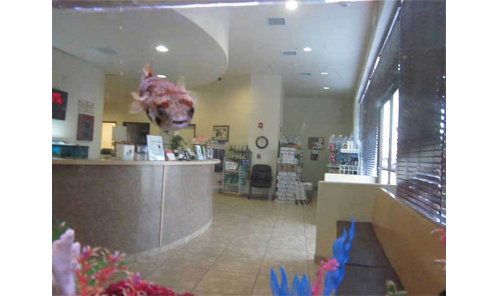 The lobby at Novak Animal Care Center