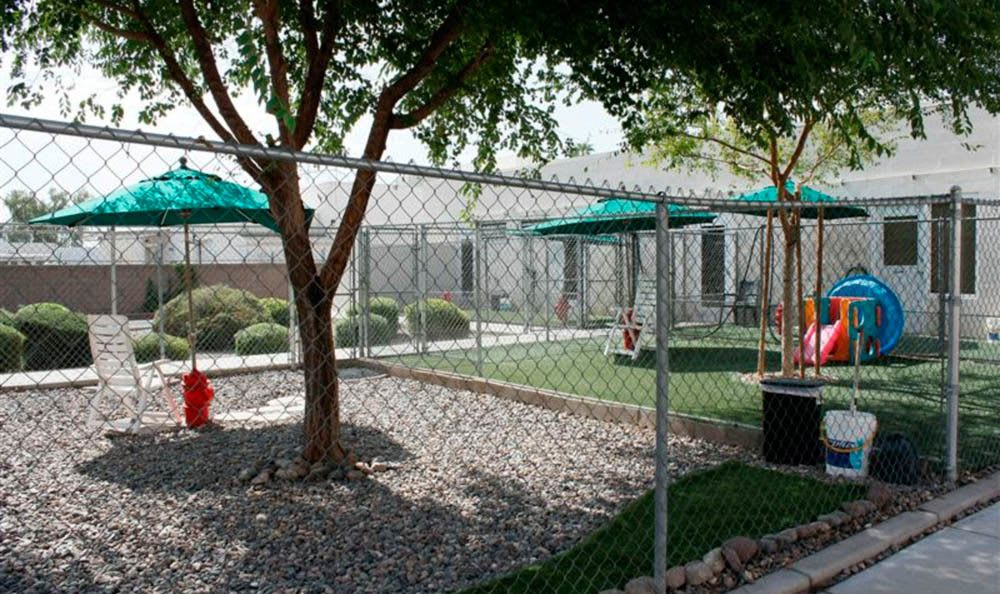 Dog Play Area At Sun City Animal Hospital