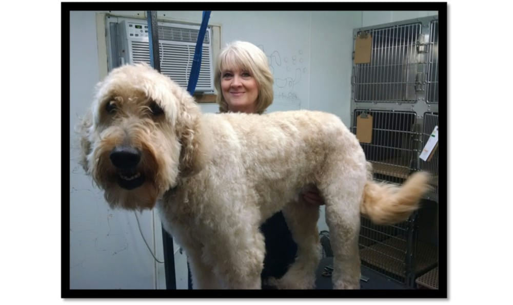 Photo of a dog after being groomed at Minooka Animal Hospital