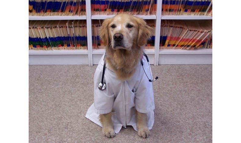 Doggy dress up at Marbletown Animal Hospital in Stone Ridge, NY
