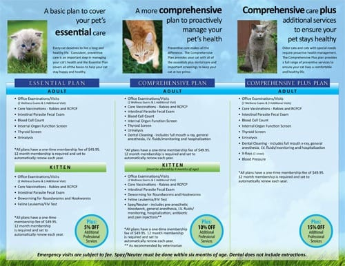 Cat wellness plans at Palm Glen Animal Hospital