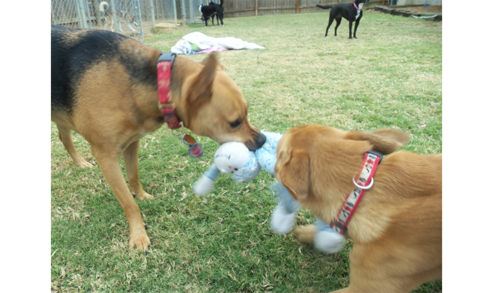 Dogs Playing 3