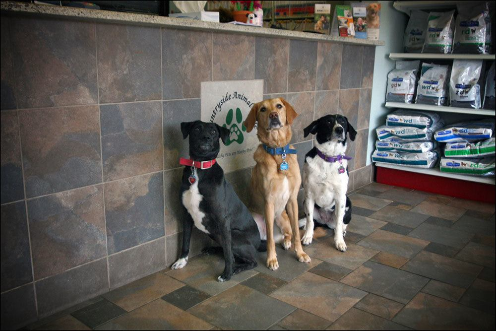 A group of dogs sitting in the waiting room at our animal clinic in Sterling