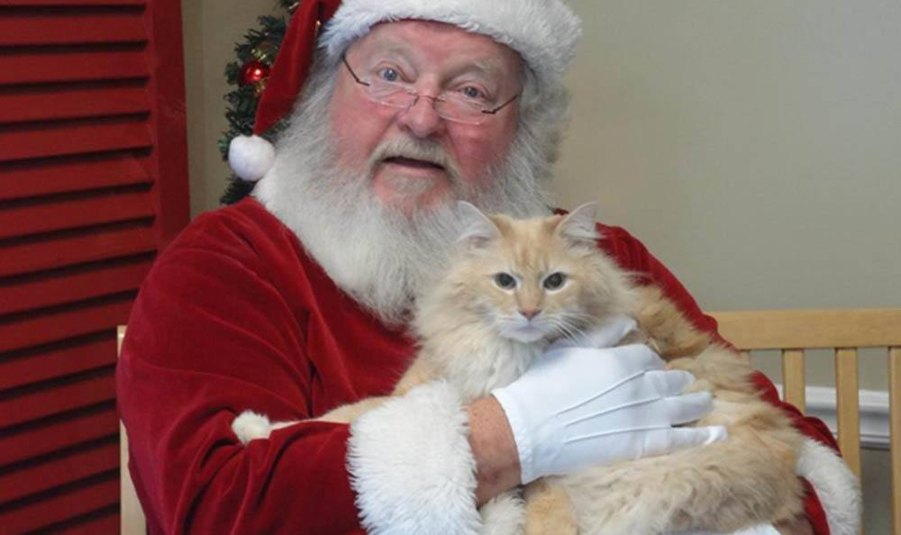 Santa Holding A Cat At Hidden Valley Animal Hospital & Boarding