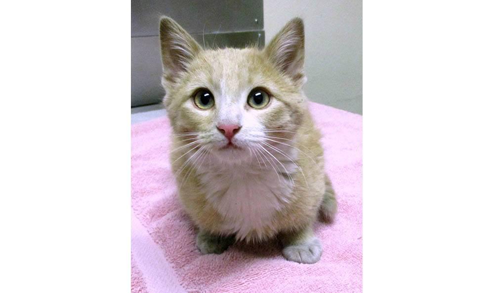 Pet cat at Cedarwood Veterinary Clinic